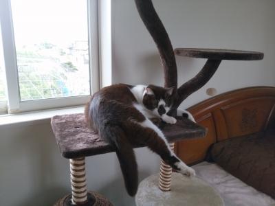 先住猫、ロメン