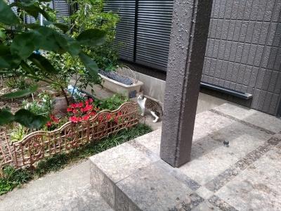 Hさんちの猫①