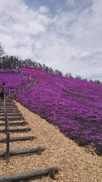 GW 写真日記~東藻琴芝桜公園
