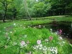 クリンソウ池