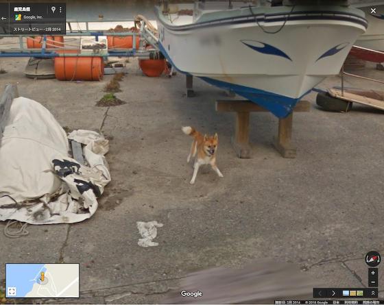 犬 種子島 google ストリートビュー