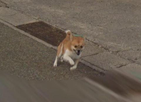 種子島の平和を守るわんこ、Googleカーを必死に追い回す姿が可愛すぎると話題に(画像)
