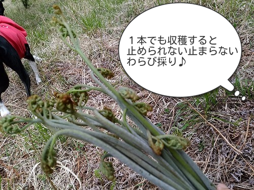 20180526_06a.jpg