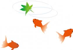 金魚と青紅葉