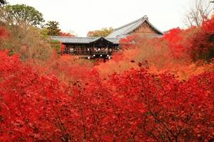 秋の通天橋