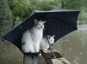 全国的に梅雨入りですね