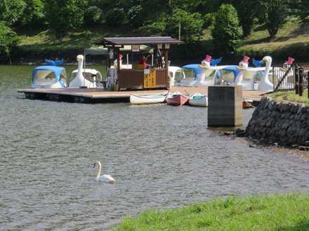 白鳥とボート2