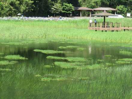 神楽女湖 4