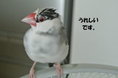 DSC_8679済