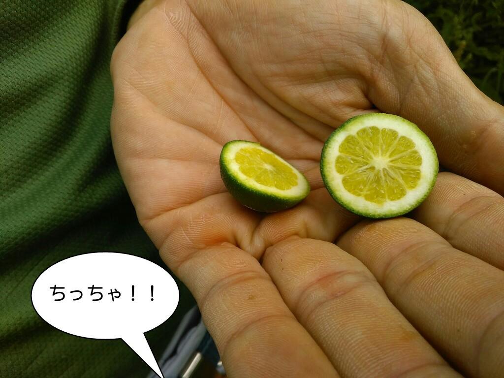 ちっちゃ!!
