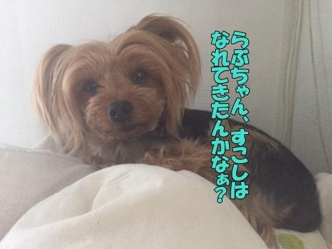 image118051002.jpg