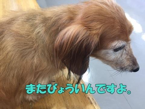 image118053101.jpg