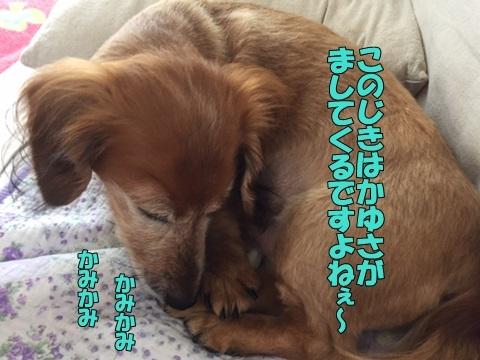 image118060801.jpg