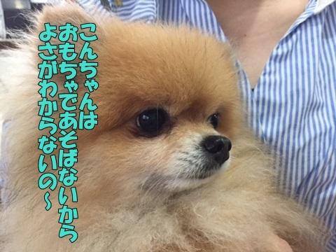 image118070702.jpg