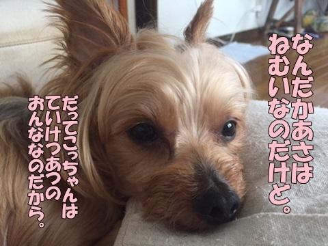 image118080801.jpg