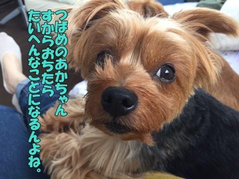 image218061901.jpg