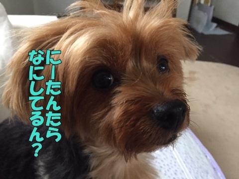 image218070701.jpg