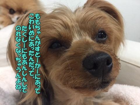 image318040202.jpg