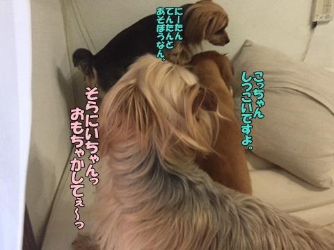 image318041203.jpg