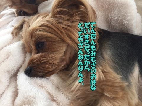 image418040701.jpg