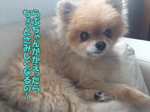 image418051201.jpg