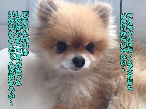 image418052201.jpg