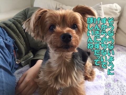 image418061901.jpg
