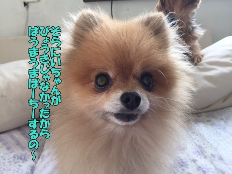 image418071001.jpg