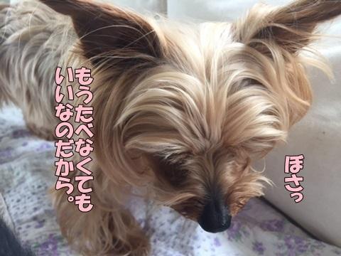 image518052801.jpg