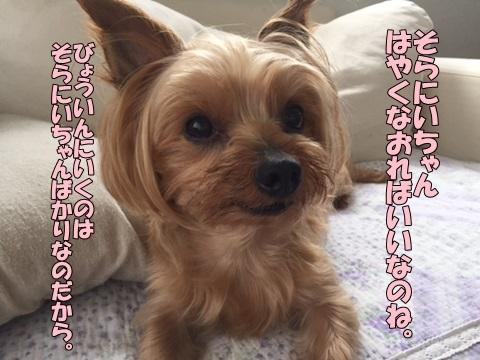 image518062701.jpg