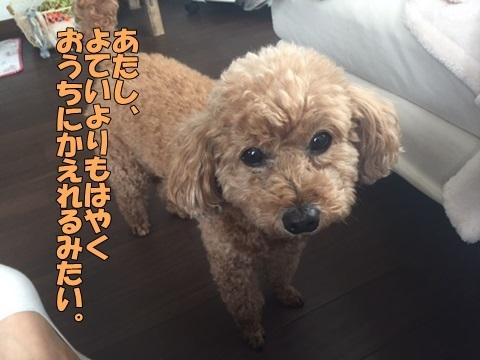 image618051201.jpg