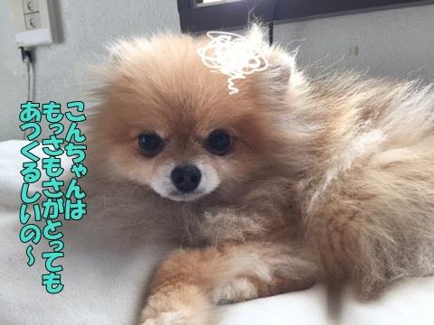 image618070201.jpg