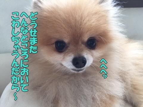 image618070301.jpg