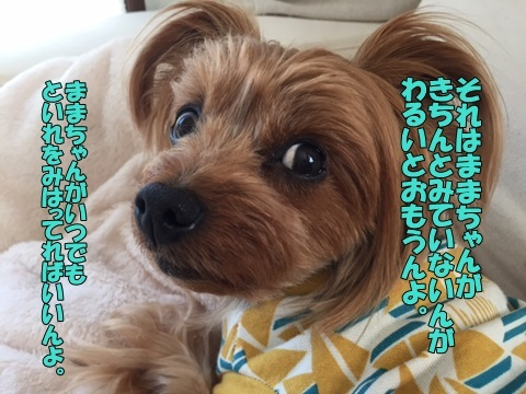 image818042803.jpg