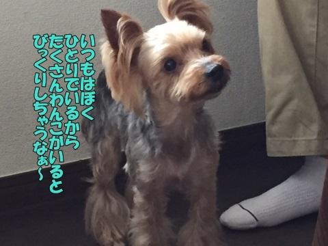 image918062501.jpg