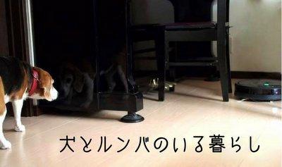 ペットのいる家庭とロボット掃除機ルンバ980