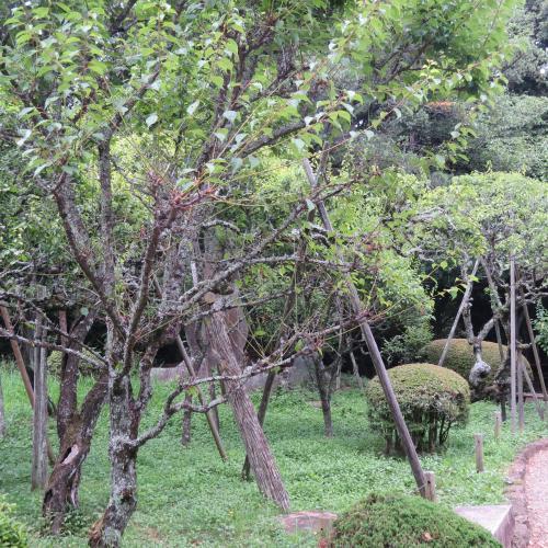 成田山公園-8