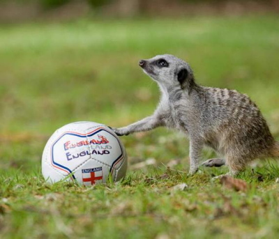 animals-also-play-football02.jpg