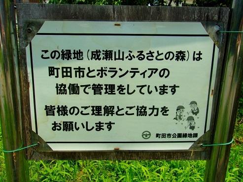 成瀬山ふるさとの森@町田市a