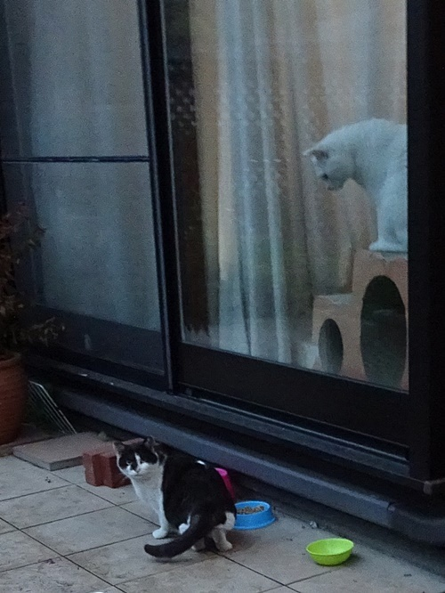 ネネコ&みぞれ