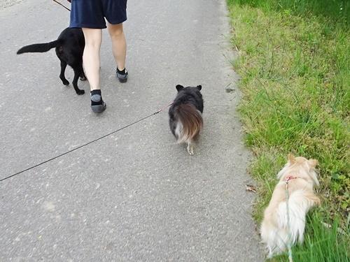ご近所散歩