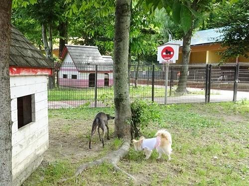犬の学校ドッグラン