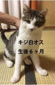 rishiri04-03.jpg