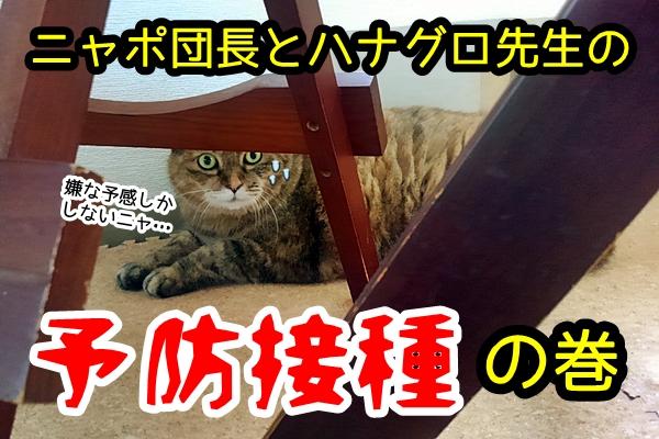 猫 予防接種