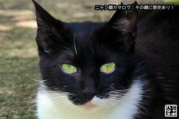 ニャン顔NO165 白黒猫さん
