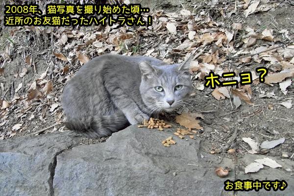 ハイトラ猫