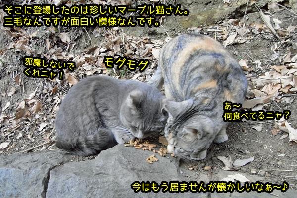 ハイトラ マーブル三毛