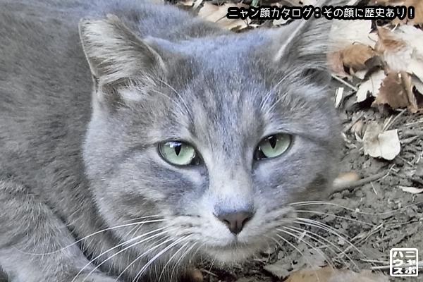 ニャン顔NO168 ハイトラ猫さん