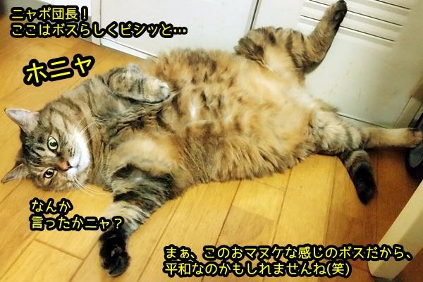 おマヌケなボス猫