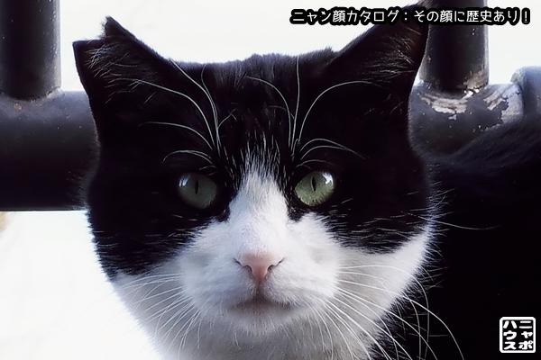 ニャン顔NO166 白黒猫さん